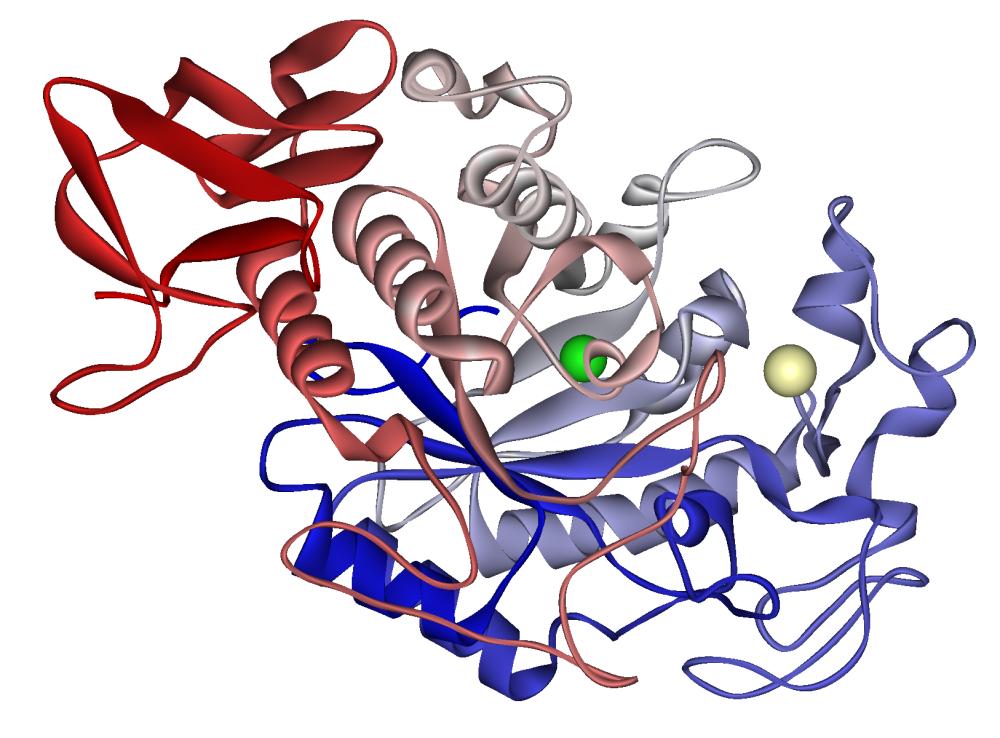 nyers vegán étrend amiláz enzim